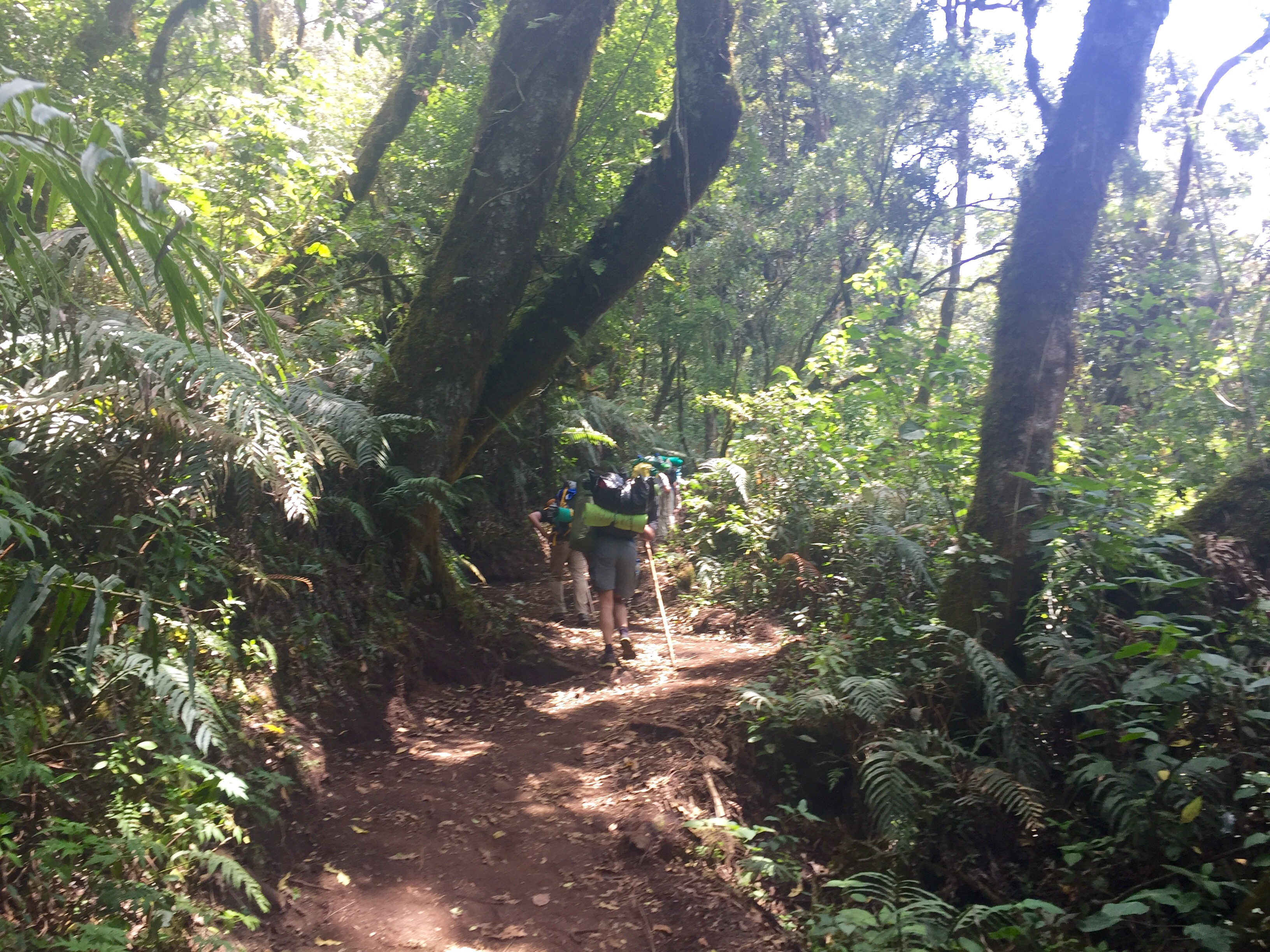 The second part of the hike, through the cloud forest.
